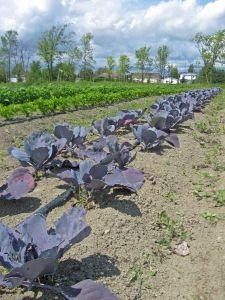 Community Sponsored Agriculture